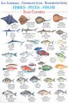 FISHES / PECES / FISCHE GUIA SUMERGIBLE